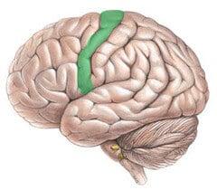 ucNSNTDc4yMxayeRNXNlpw m - Neuralink Илона Маска. Часть четвертая: нейрокомпьютерные интерфейсы