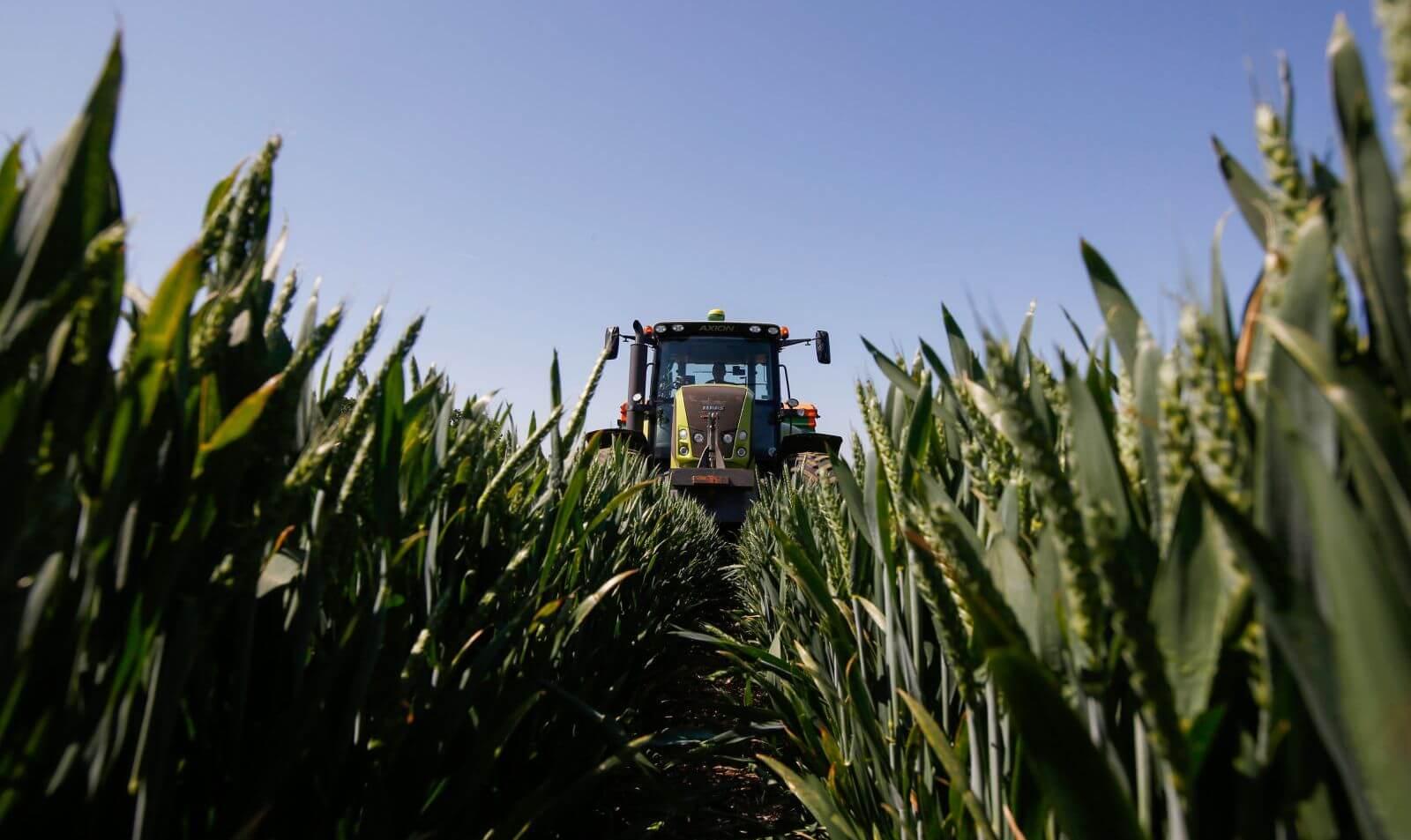 Искусственный интеллект спасёт зерновые культуры от болезней и вредителей