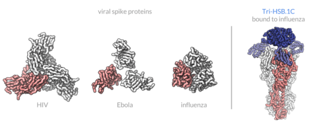 Компьютерное проектирование противовирусных белков может предупредить очередную пандемию (3 фото)