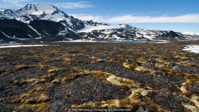 p051x6bt 650x366 - В земных ледниках просыпаются опасные болезни