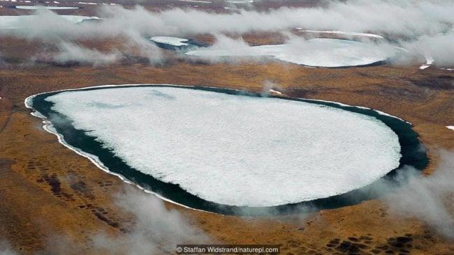 p051x6gy 1 650x366 - В земных ледниках просыпаются опасные болезни