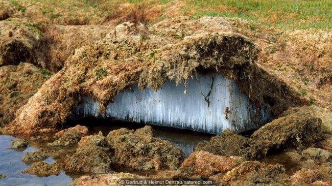 p051x88h 650x366 - В земных ледниках просыпаются опасные болезни