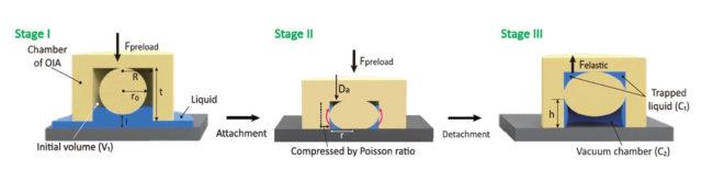 writlsttqow0zwg5eazj 650x155 - Осьминог вдохновил учёных на создание подводной клейкой ленты
