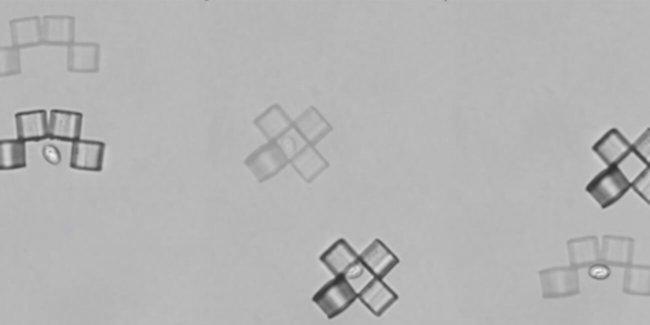 Микроботы-оригами изловили дрожжевую клетку (3 фото)