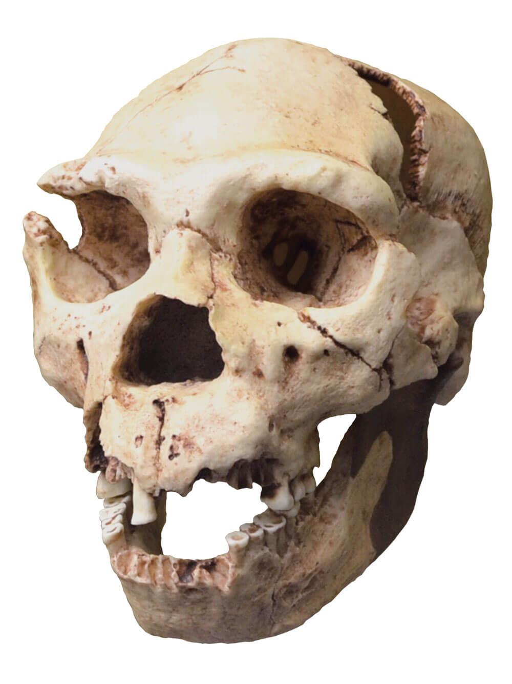 Генетики изучают тайны забытой истории неандертальцев (2 фото)