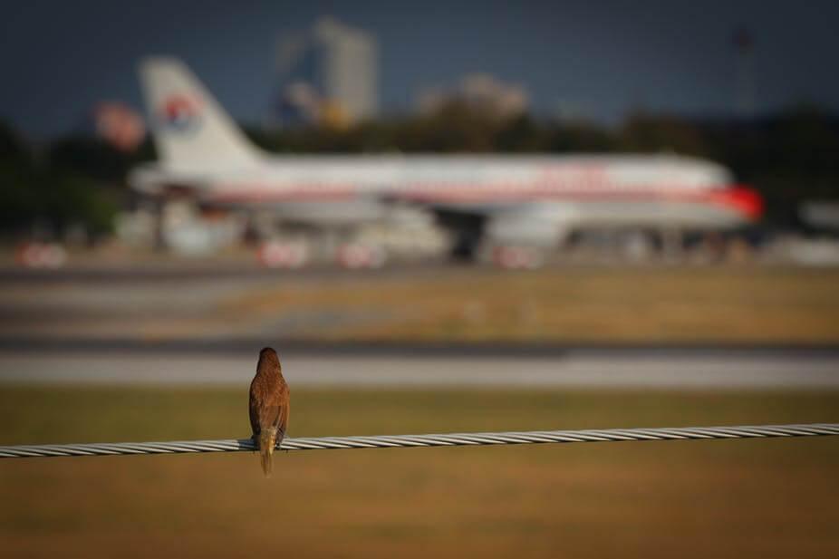 Что происходит, когда птица сталкивается с самолетом? (+видео)
