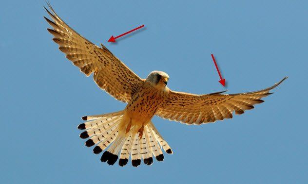 10 гениальных изобретений, которые люди подсмотрели у животных (11 фото)