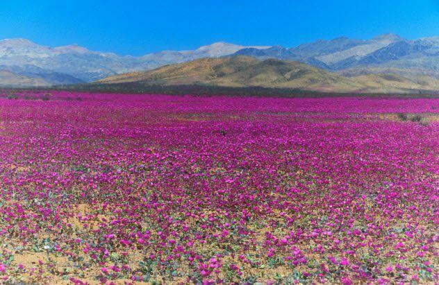 10 природных явлений, в существование которых вы не поверите (11 фото)