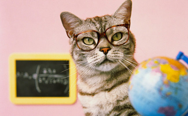 Представлен робот-кот для обучения детей
