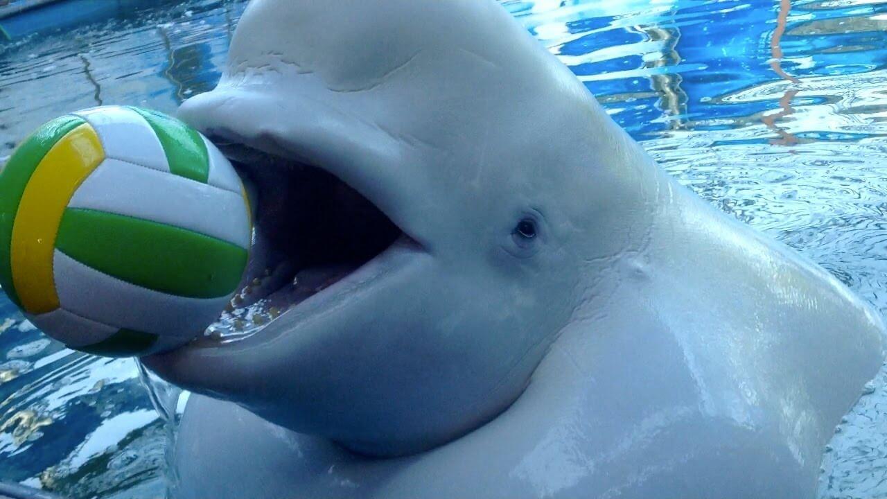 Действительно ли дельфины так умны, как о них говорят? (5 фото)