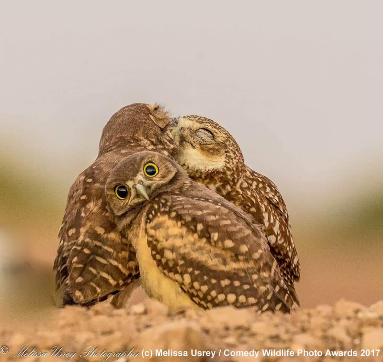 #фото | Работы финалистов конкурса фотографии Comedy Wildlife Photography 2017