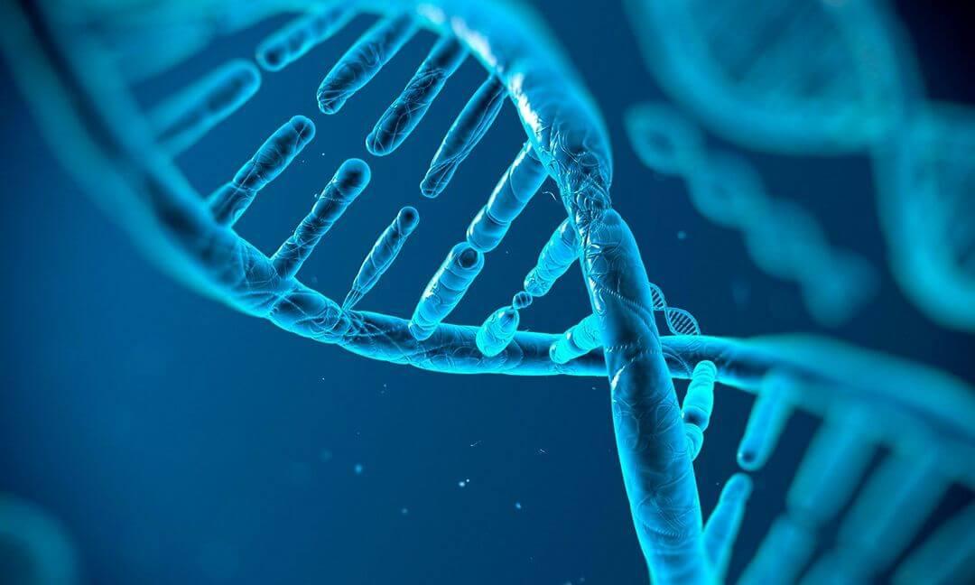 Учёные впервые отредактировали геном непосредственно внутри живого человека