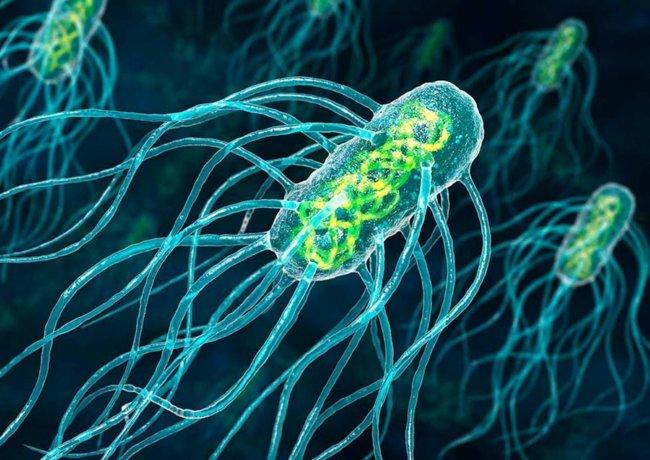 Бактерий смогли превратить в нанороботов