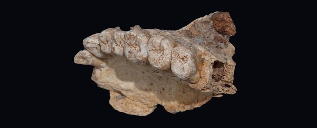 Современные люди вышли из Африки на 50 тысяч лет <span id=