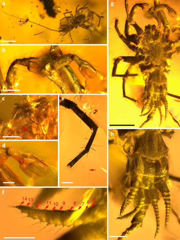 Учёные обнаружили в куске янтаря вымершего паука-химеру