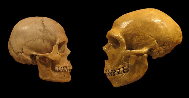 Пять удивительных фактов о наших предках, которые мы узнали из ДНК (2 фото)