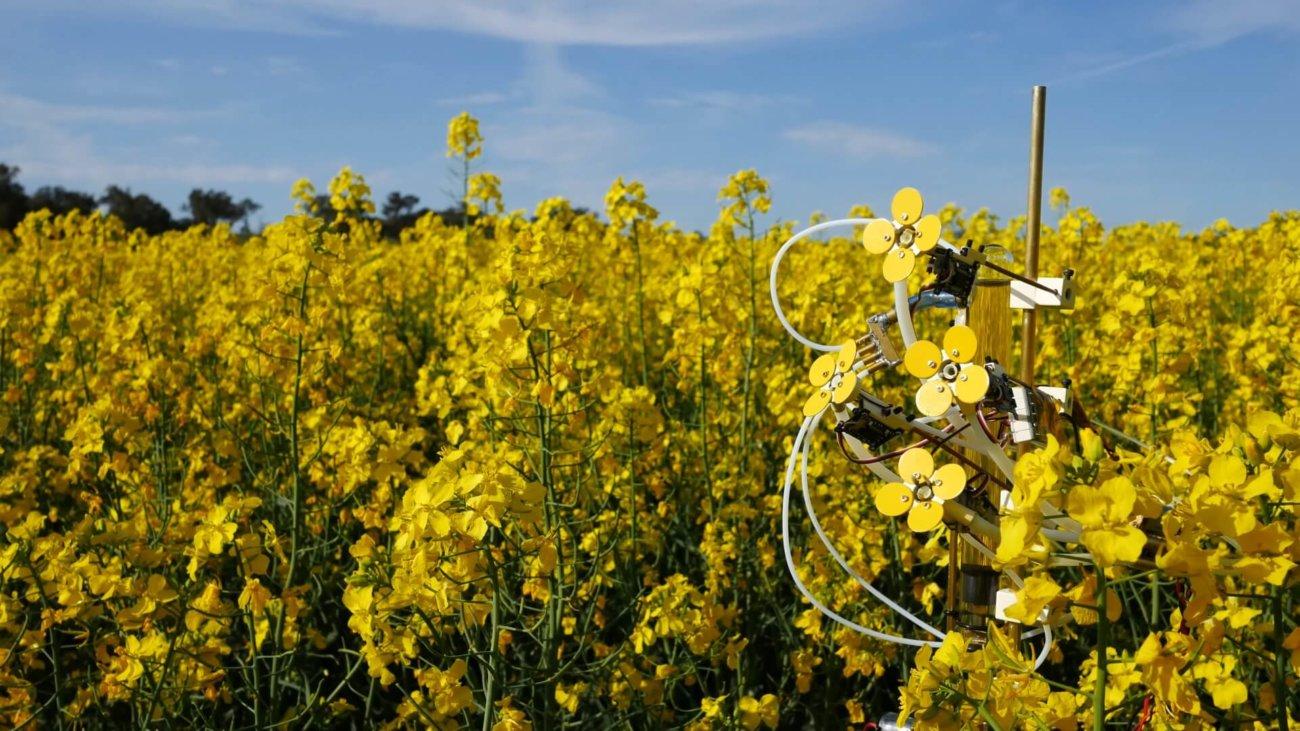 В Австралии создали искусственный цветок с нектаром и пыльцой