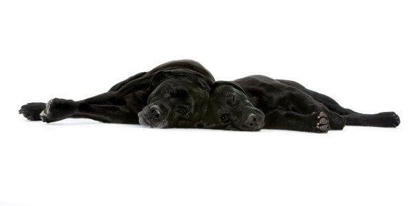 Клонирование домашних любимцев набирает обороты (3 фото)