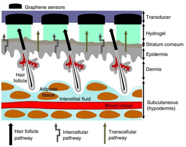 Без иголок: создан «умный» пластырь для анализа глюкозы в крови (2 фото)
