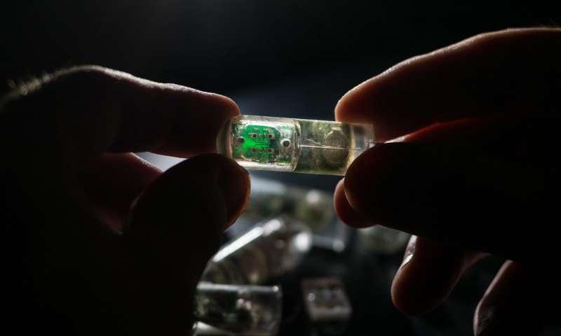 «Бактерии-на-чипе» помогут диагностировать болезнь изнутри