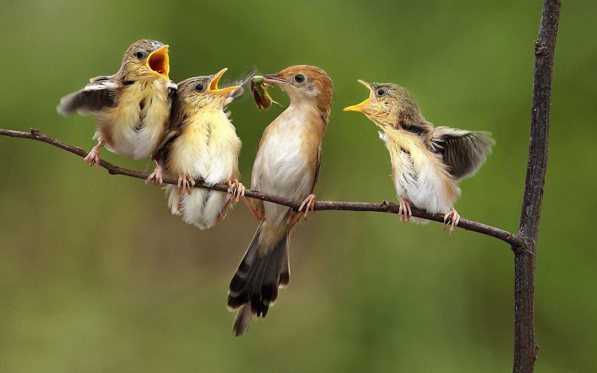 Искусственный интеллект научился определять птиц по их пению