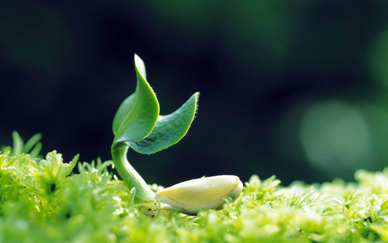 представлены генетически модифицированные умные растения