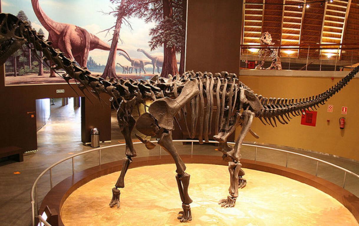 юар нашли останки самых крупных динозавров юрского периода