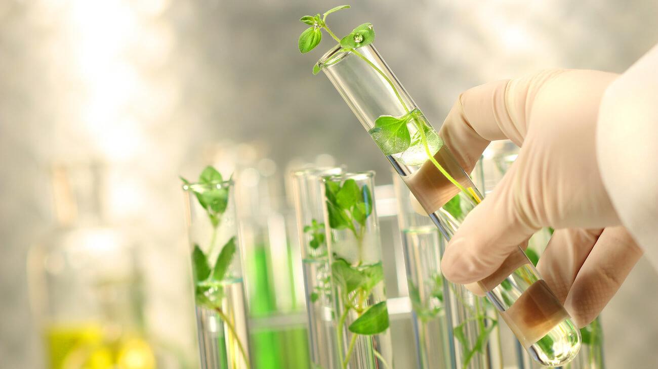 Биологи нашли способ создавать растения, способные выжить на других планетах