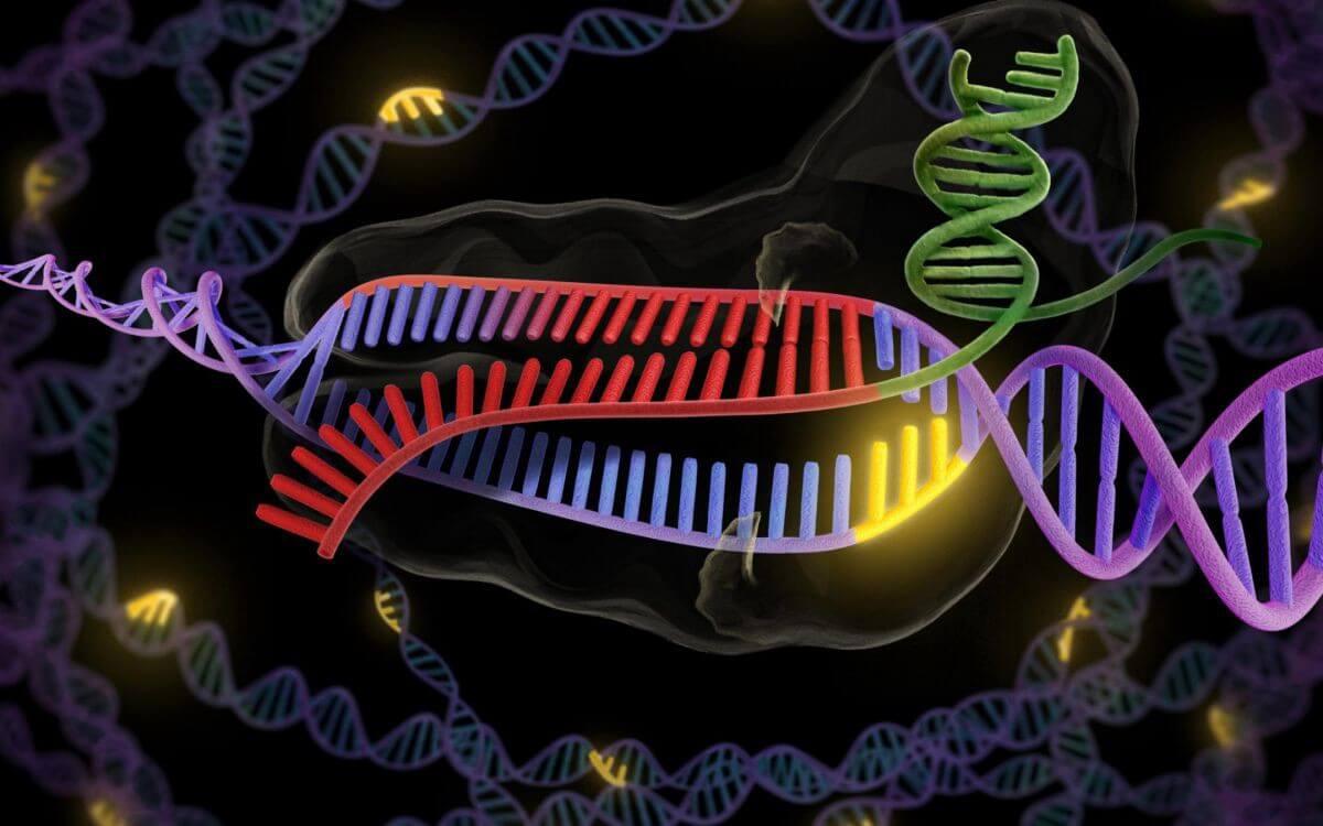 Китай приказал остановить работу по редактированию генома людей. Автор работы исчез