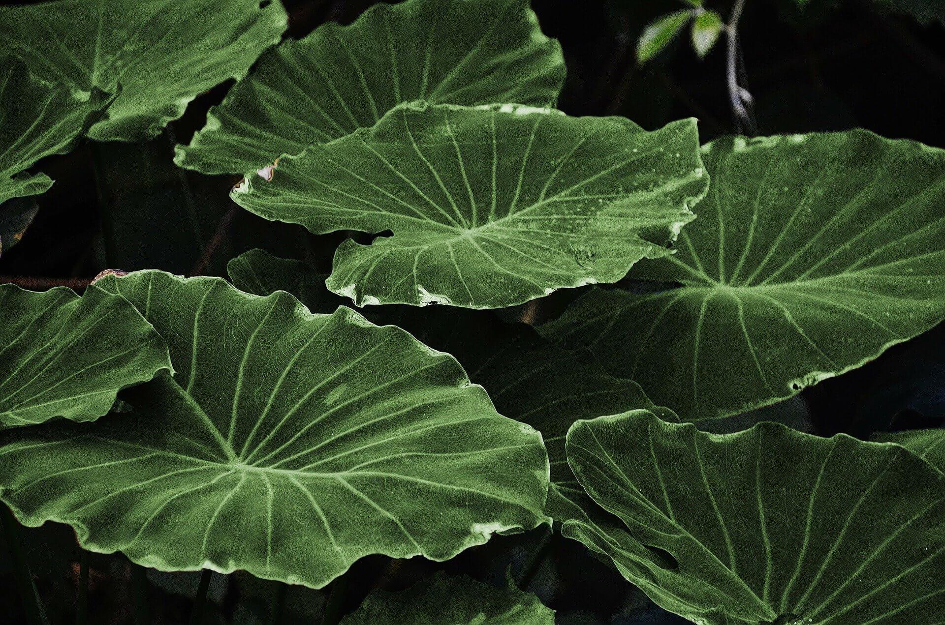 «Незабудка»: ученые точно определили механизм памяти у растений