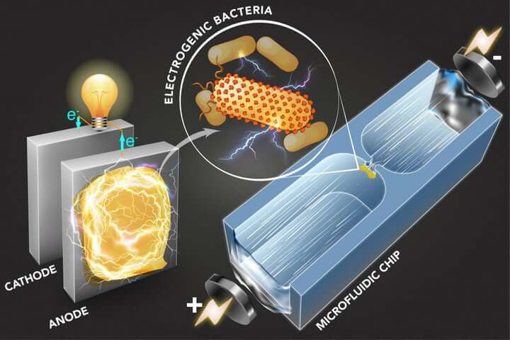 Микрожидкостный чип MIT