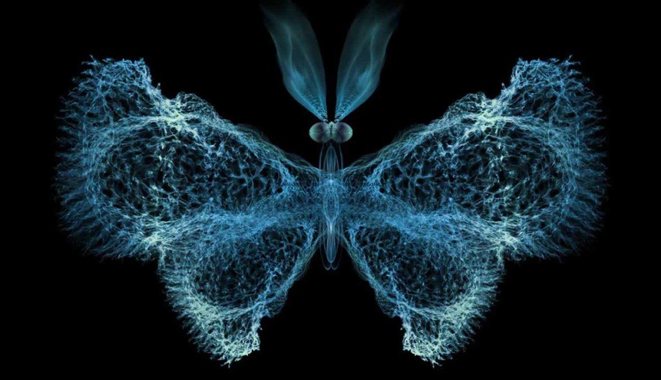 Ученые: работа иммунной системы напрямую зависит от математической теории хаоса