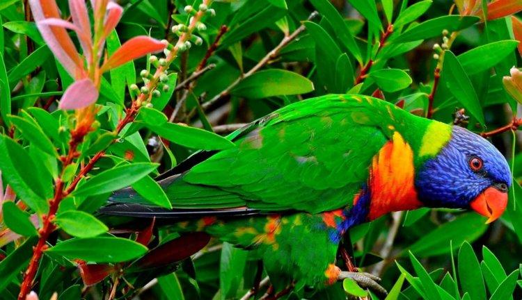 Зрение птиц