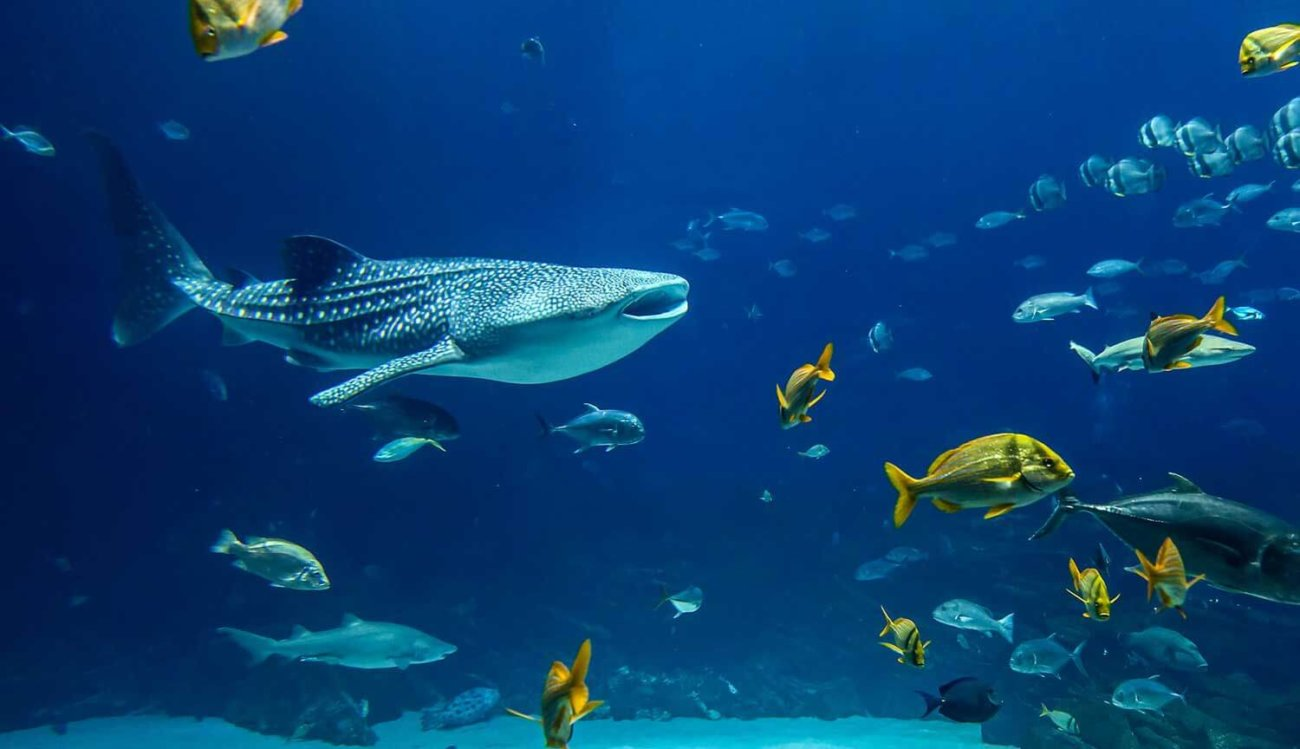 Одной загадкой больше: найдены рыбы, живущие в «мертвой воде»