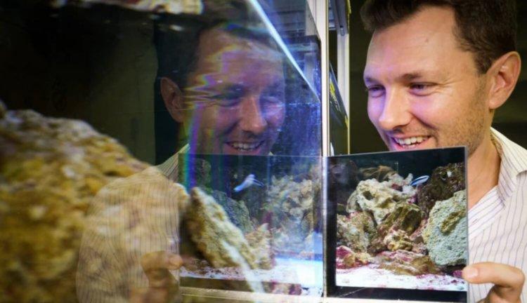 Рыба и ее отражение