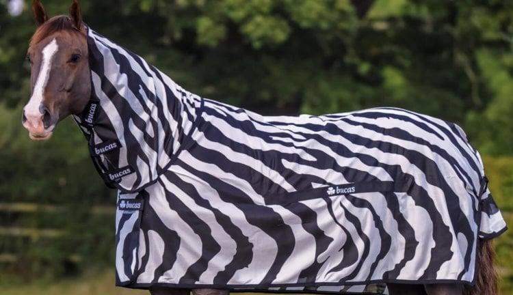 Лошадь в костюме зебры