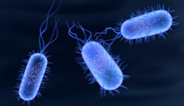 Первые многоклеточные организмы