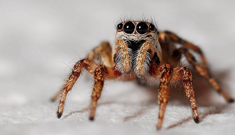 Окаменелый паук умеет светить глазами даже спустя миллионы лет