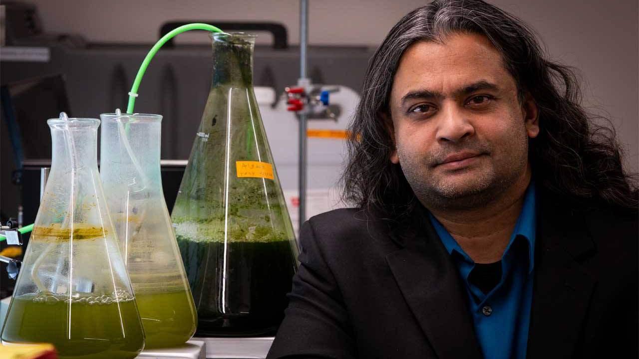 Ученые разработали дешевый способ производства биотоплива из водорослей