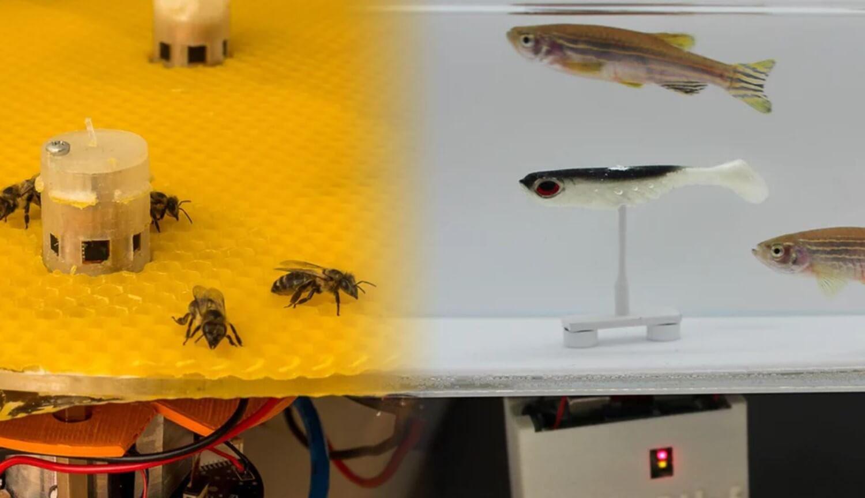Рыбы и пчелы