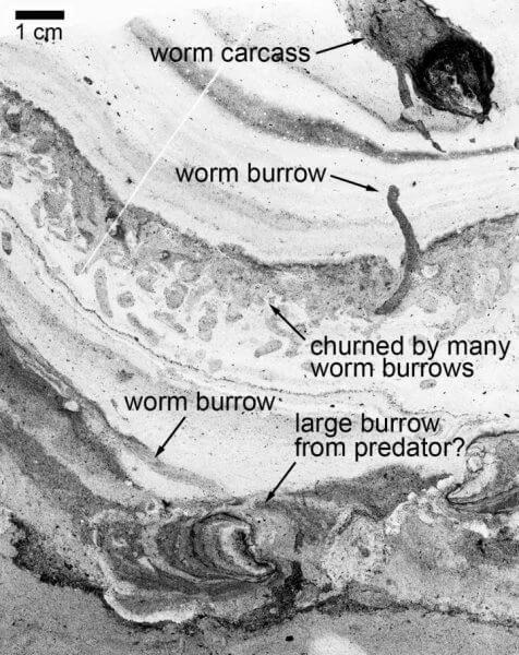 Хищные черви