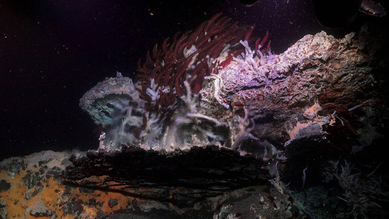 Морские минералы