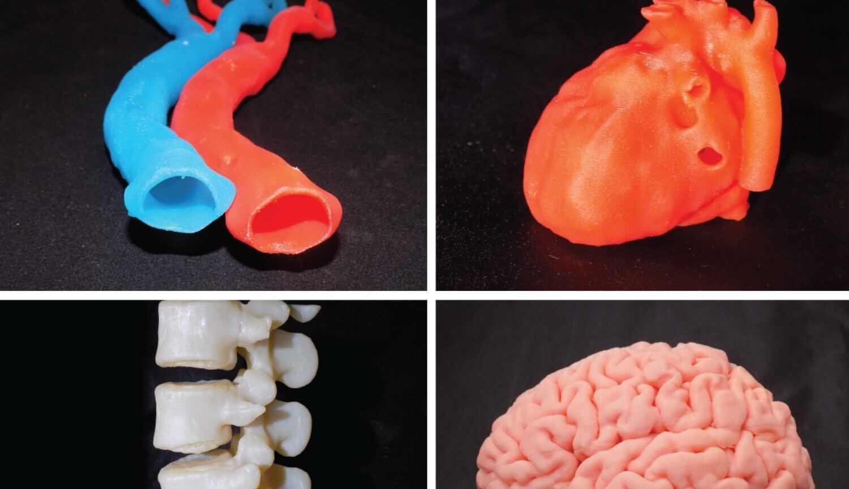 Найден способ сохранять клетки живыми при 3D-печати больших органов
