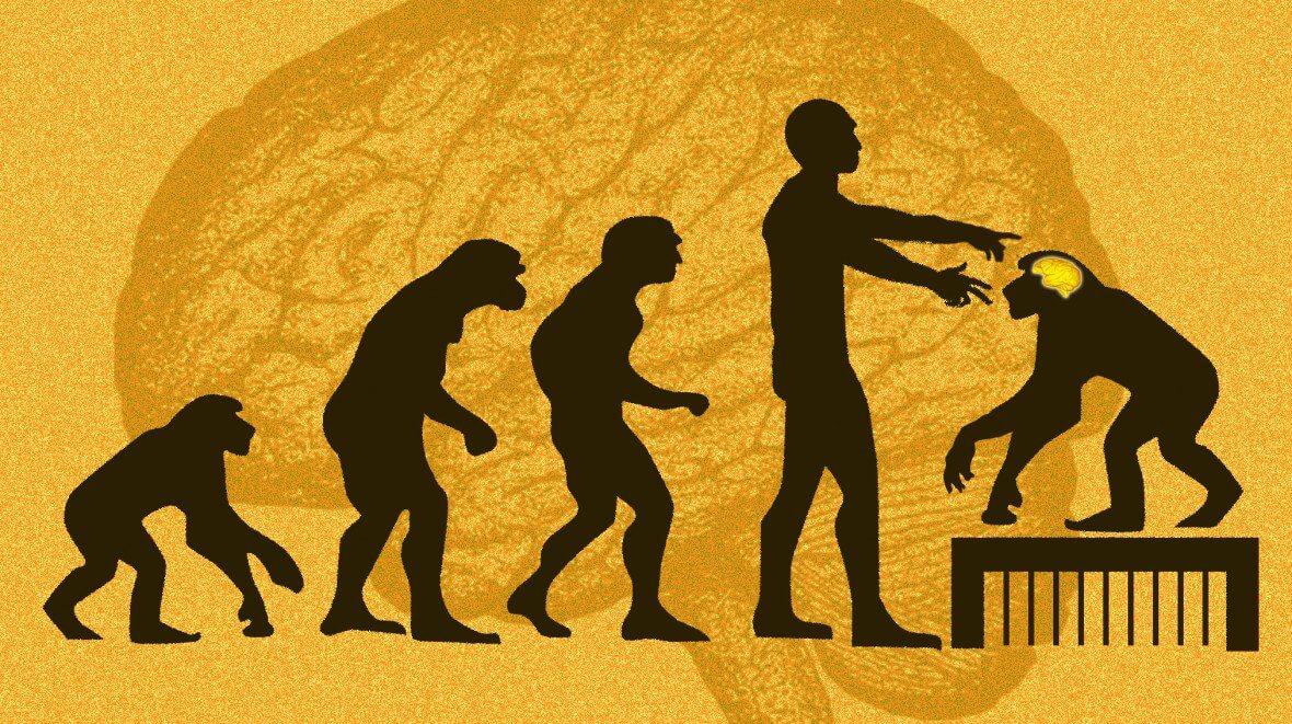 Китайские ученые внедрили гены мозга человека обезьянам. Как думаете, они стали умнее?