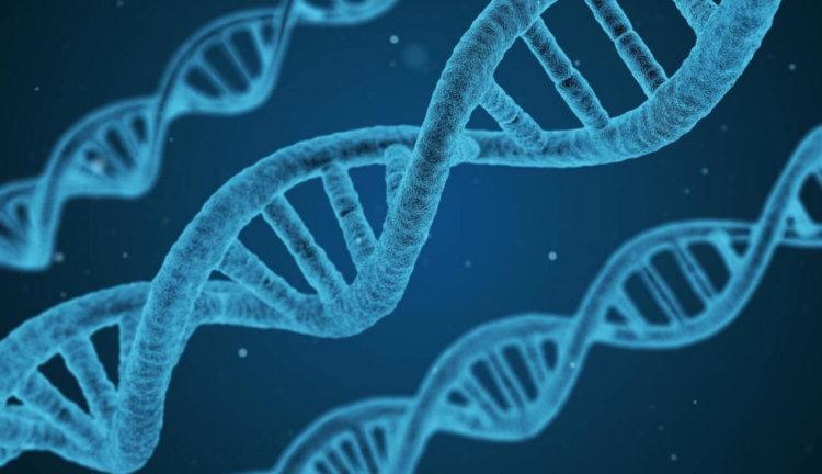 Искусственный геном