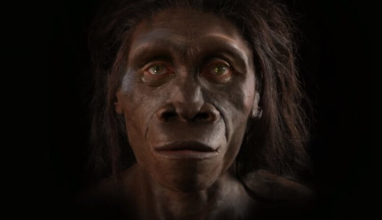 Эволюция человеческого лица