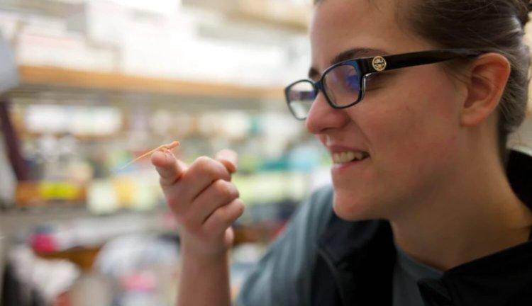 Генетически-модифицированная ящерица