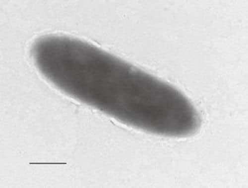 На дне Марианской впадины обнаружены бактерии, питающиеся нефтью