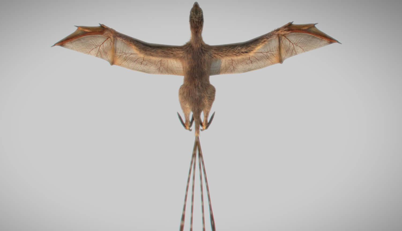 Эволюция провела эксперимент, создав динозавра с крыльями летучей мыши