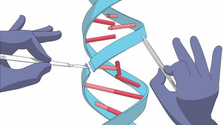 Оправданы ли риски использования CRISPR? Давайте поразмыслим